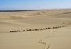 Kamelkarawane bei Dunhuang (Gansu) – ©  Stefan Schomann