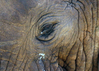 Addo Nationalpark - ©  Piet Heymans,